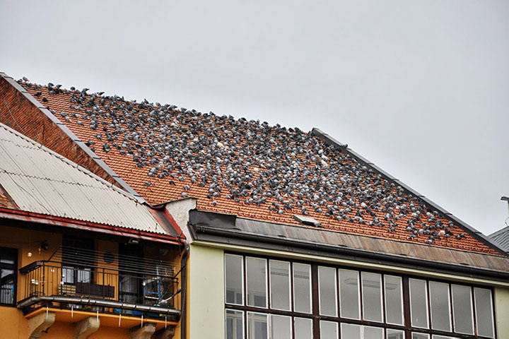 A2B Pest Control are able to install spikes to deter birds from roofs in Westminster.
